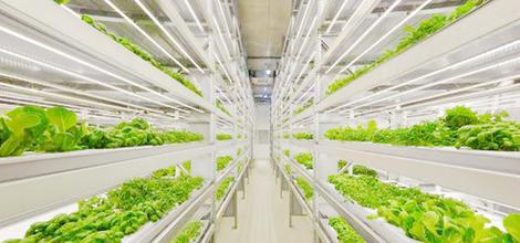 農業・食品関連